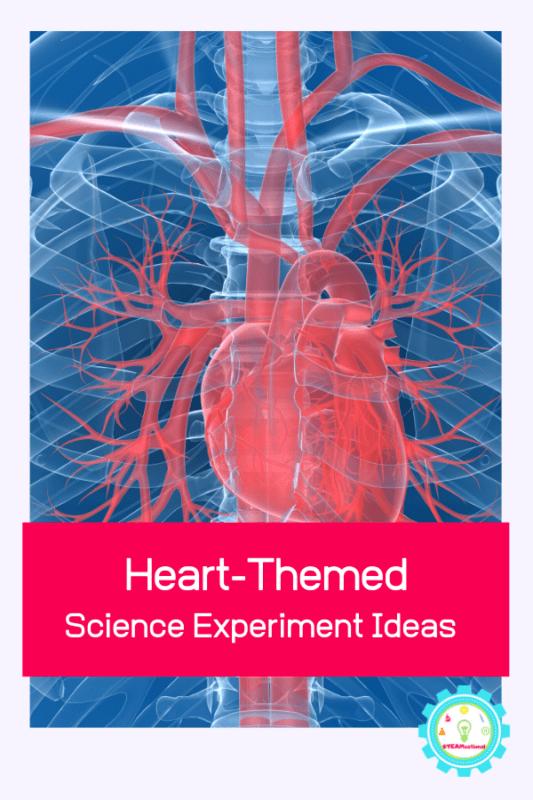 heart science experiment ideas