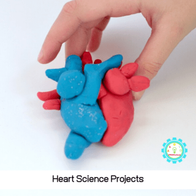 Heart Science Projects