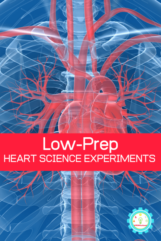 low prep heart science experiments