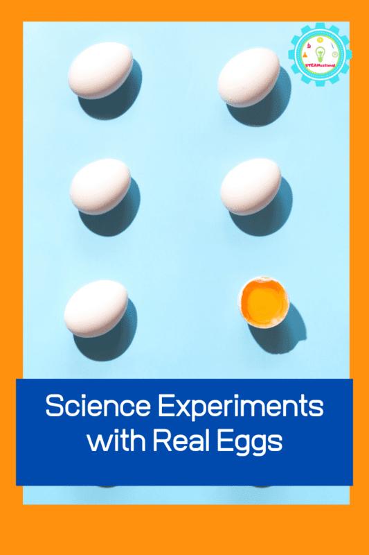 egg activities