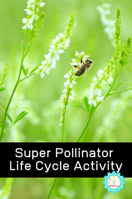 Super Pollinator Science Activity