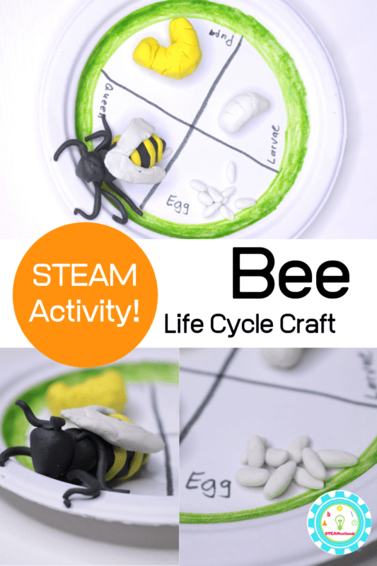 Bees are super pollinators and are beneficial for the world. Learn about bees in this 3D bee life cycle activity and craft for kids!