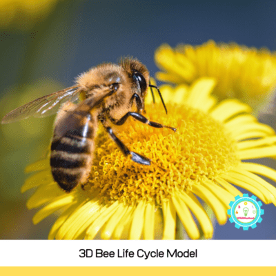 3D Life Cycle of a Bee Activity for Kids