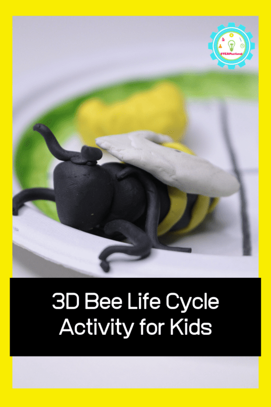 life cycle of a bee activity