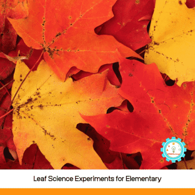 8 Brilliant Leaf Science Experiments for Elementary