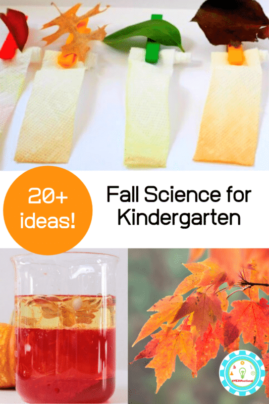 I love working the current season into my teaching, and as fall is one of my favorite seasons, I just love fall science experiments for kindergarten!