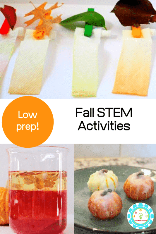 fall stem projects