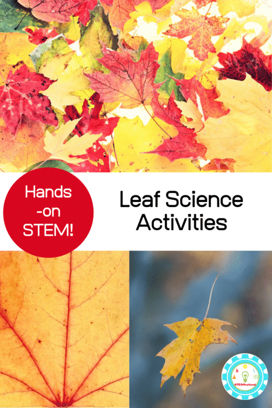 If you teach elementary science you will love this collection of leaf science experiments for elementary science!  Fun fall science for kids!