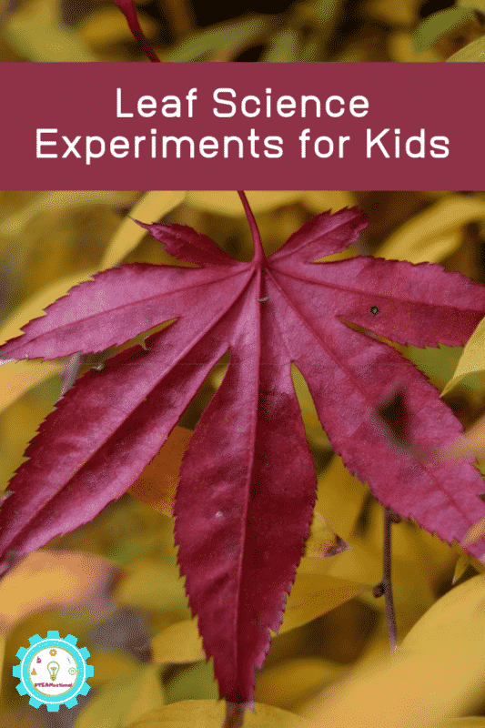 elementary leaf science experiments