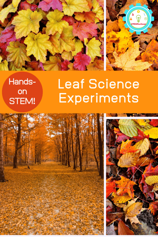 leaf science experiments for kids