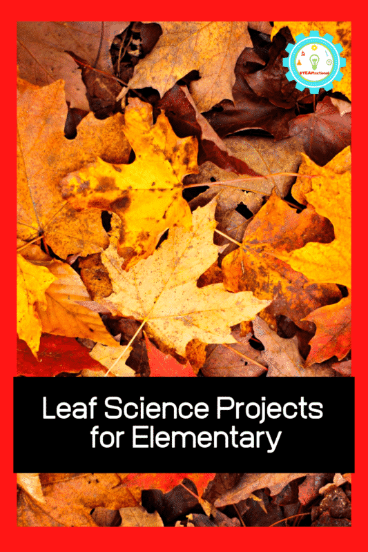 Leaf Science Fair Projects