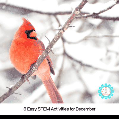 8 STEM Activities for December with Festive Flair
