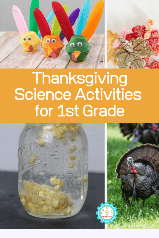 thanksgiving science activities for 1st grade