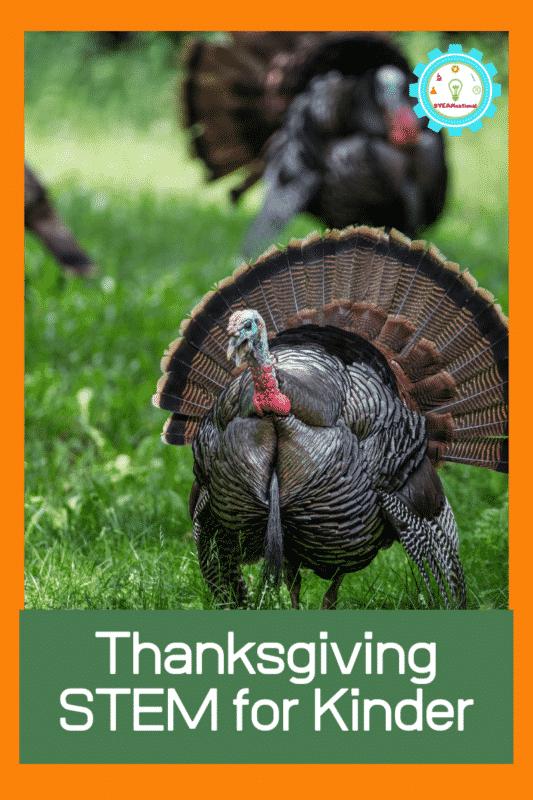thanksgiving stem for kinder