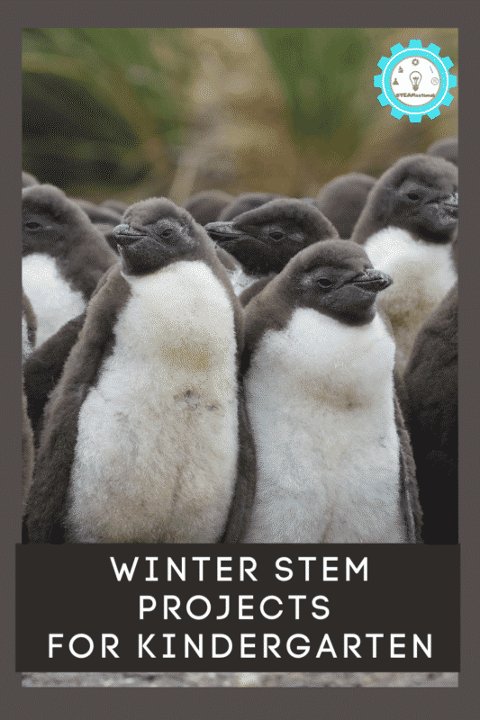 winter stem projects for kindergarten