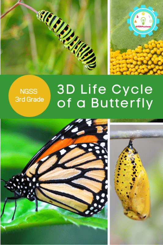 3d life cycle of a butterfly