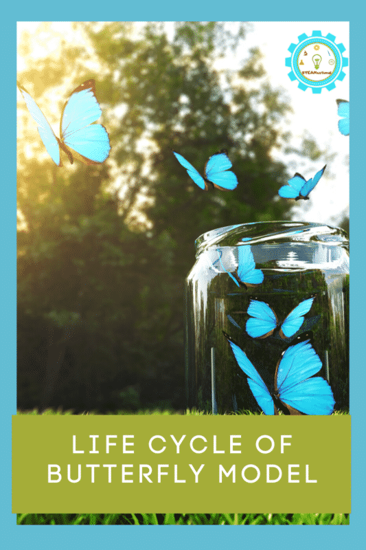 3d life cycle of a butterfly model