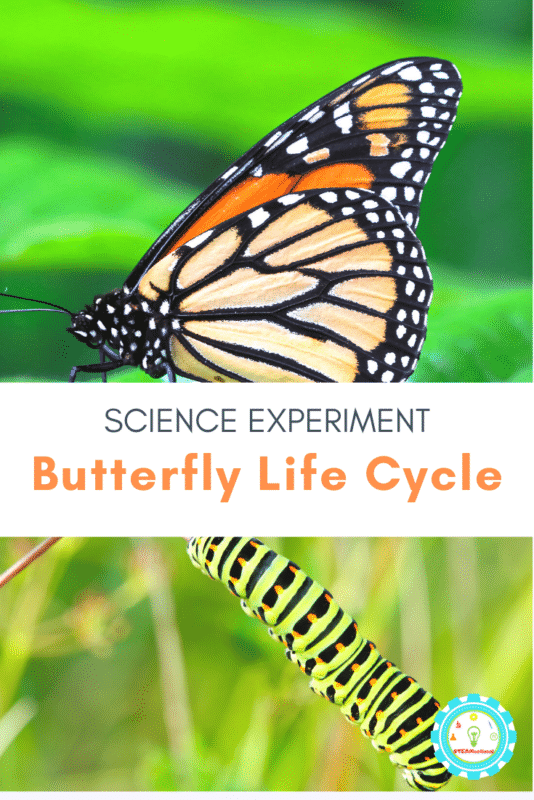butterfly life cycle science experiment