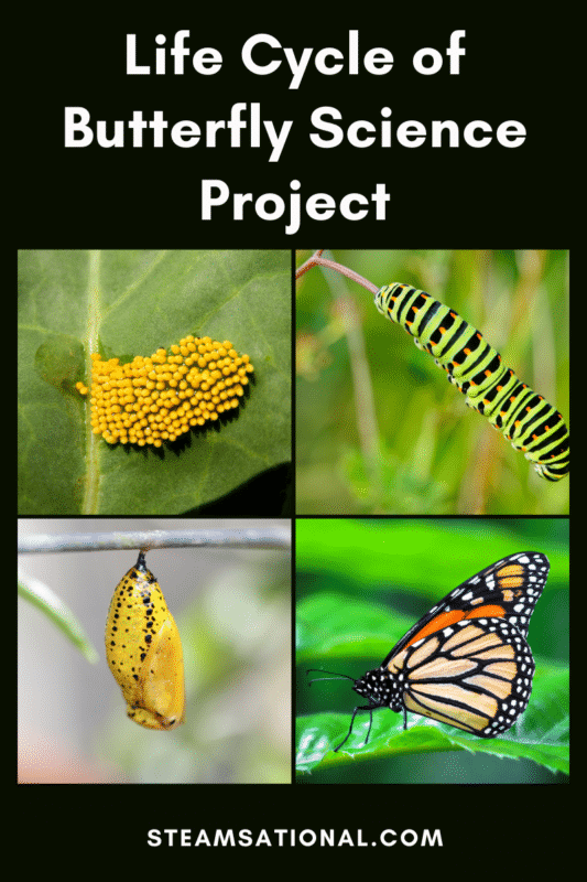 life cycle of a butterfly science project