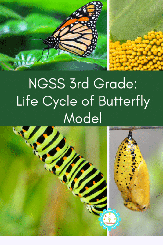 Try the butterfly life cycle science project and learn how the butterfly life cycle works! This lesson works well with any third-grade life cycle lesson and also aligns with NGS standards