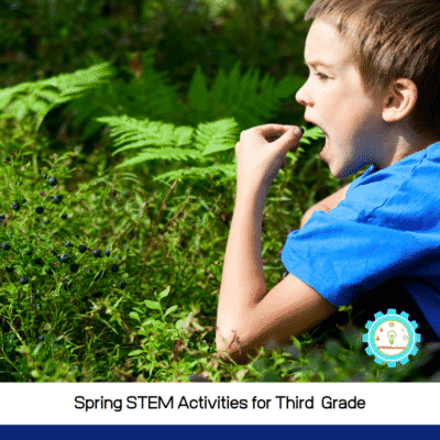 20+ Spring STEM Activities for 3rd Grade to Celebrate Spring!