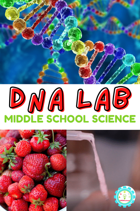Here is how to extract DNA from a strawberry! Kids will have a lot of fun with this hands-on science lesson.