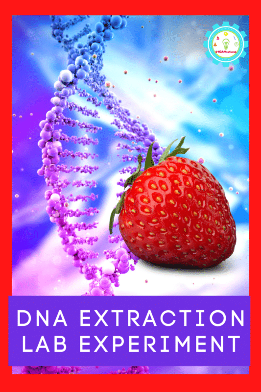Can you remove DNA from a strawberry? Try it out in the DNA Extraction Lab Lesson Plan! Learn How to Extract DNA from Cells!