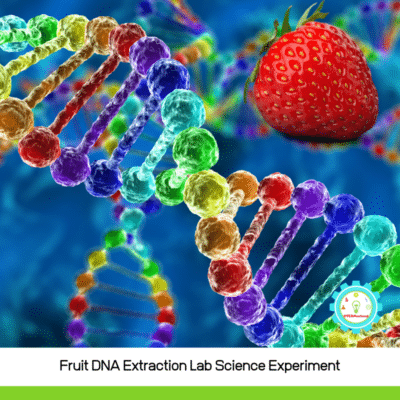 DNA Extraction Lab: Extracting DNA from Strawberries and Other Fruit