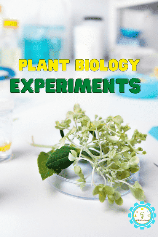 Learn all about plant biology with these hands-on plant stem activities! Low-prep lesson plans aligned with NGSS perfect for elementary!