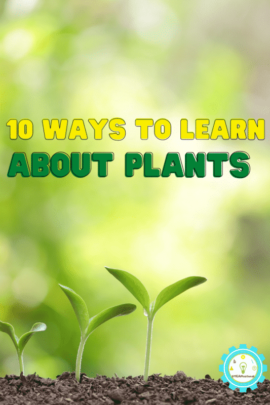 Teaching science and STEM this spring? If you're checking out spring STEM activities, learn about plants with these STEM plant activities that are all about plants, biology, and plant life cycles!