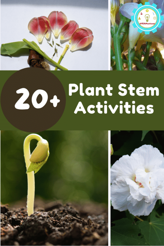 If you're looking for spring STEM activities, don't miss these hands-on plant stem activities that are all about plant biology!
