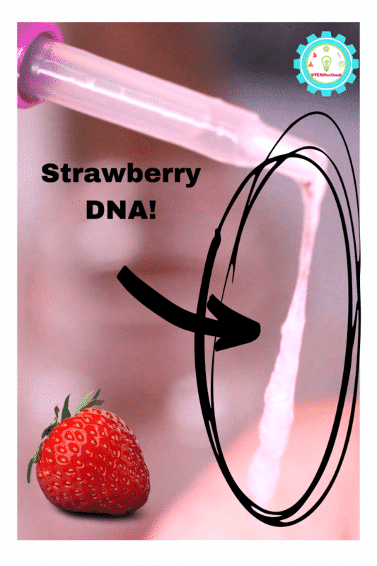In this experiment, you are extracting DNA from fruit! It's a multi-step science experiment that you can use to explore what DNA strands look like up close.