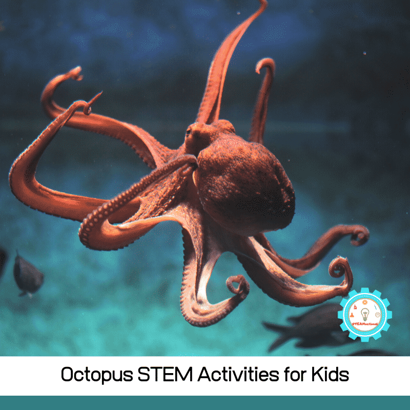 These octopus STEM experiments show kids how an octopus lives, acts, and looks!